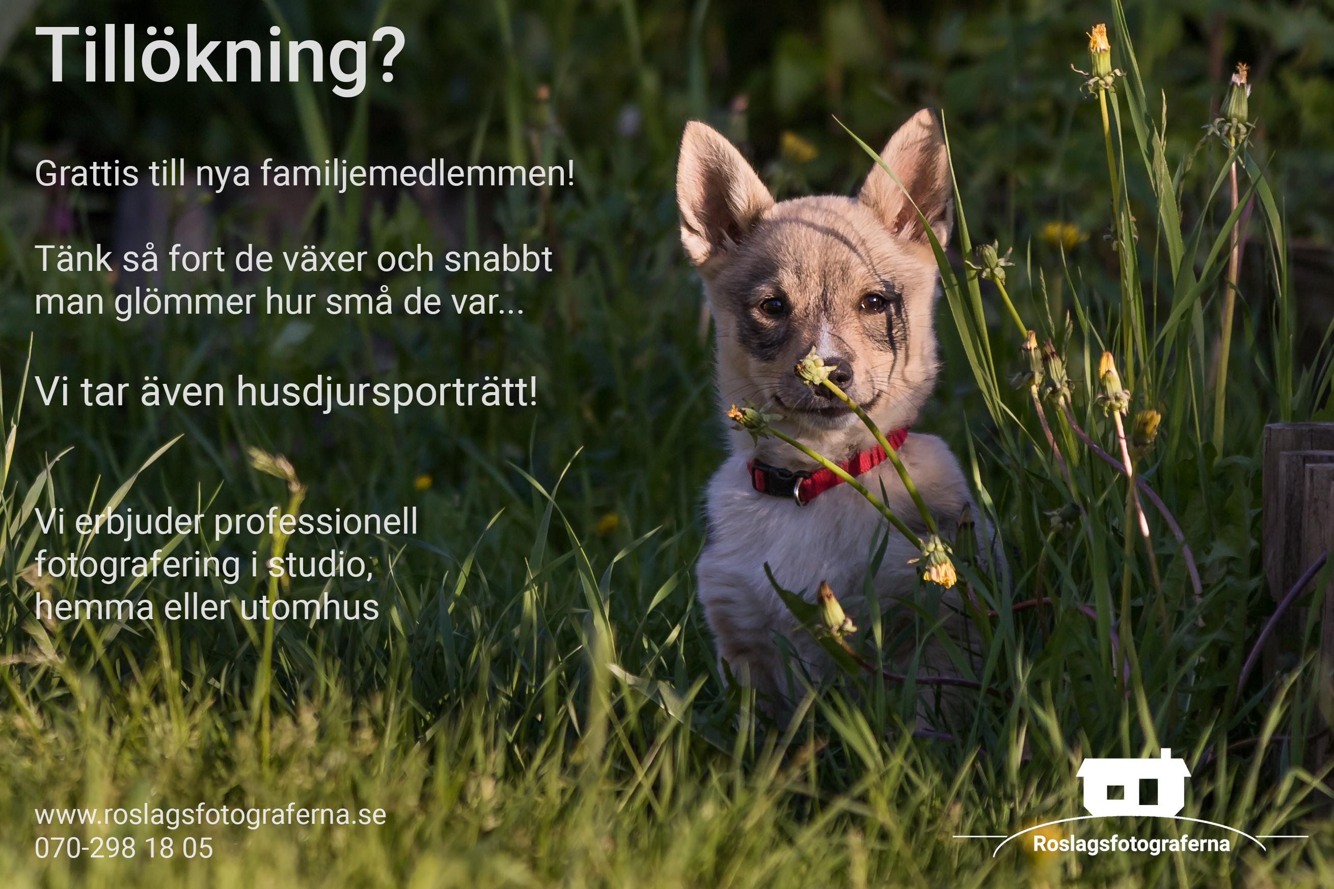 Husdjursporträtt