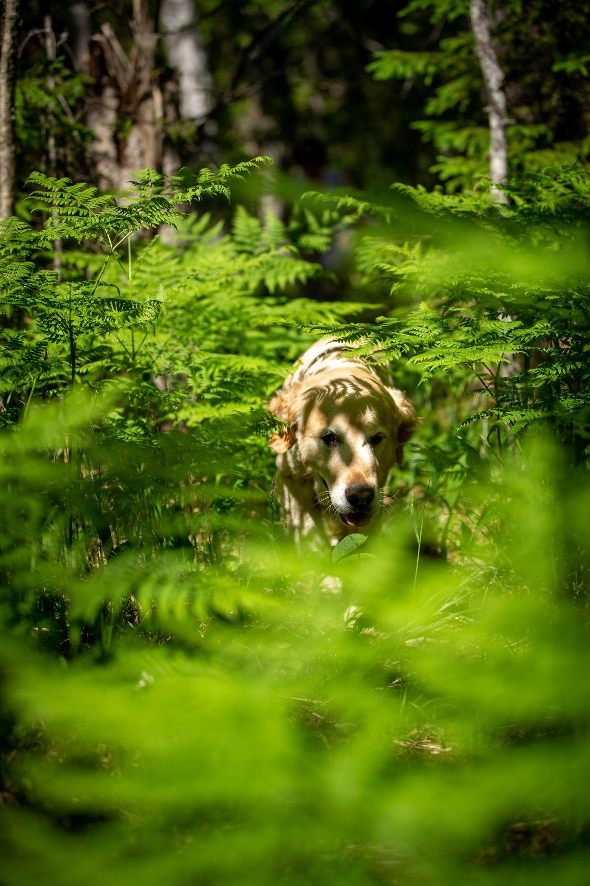Husdjur porträtt hund Väddö Roslagen Norrtälje